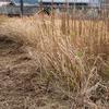 耕作放棄地への挑戦